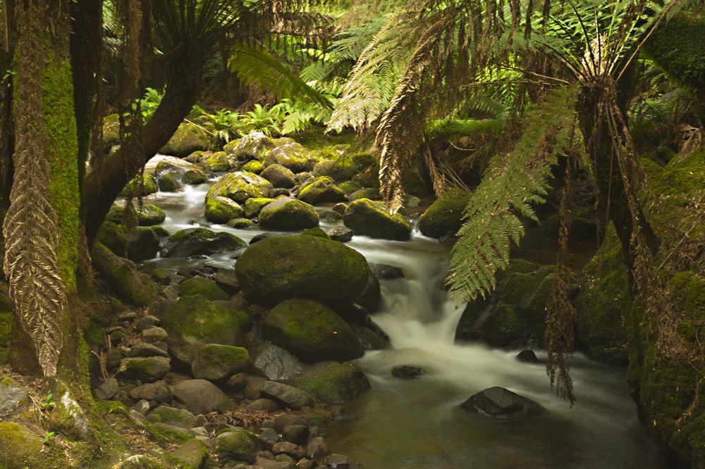 Waterfall 3 in Tasmania by tcbenneyworth