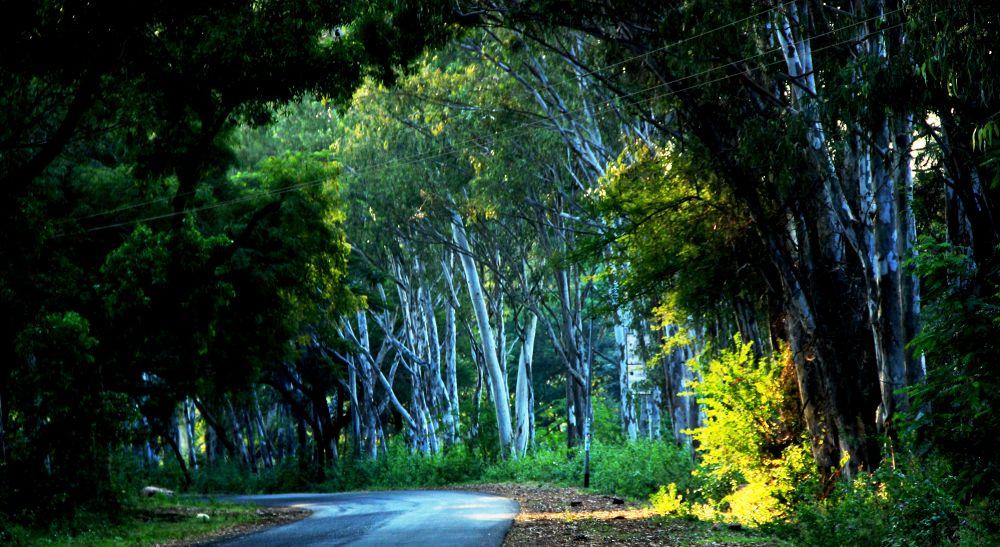 ROAD IN GREEN by Yogi Biradar