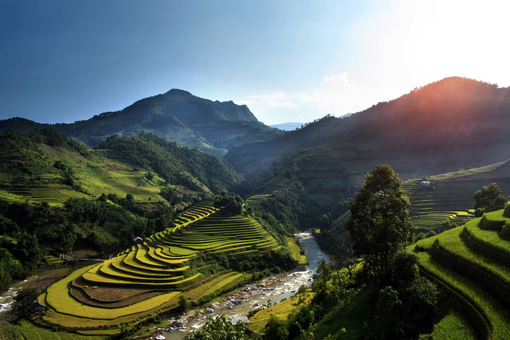 Terraced fields by Cao Phan