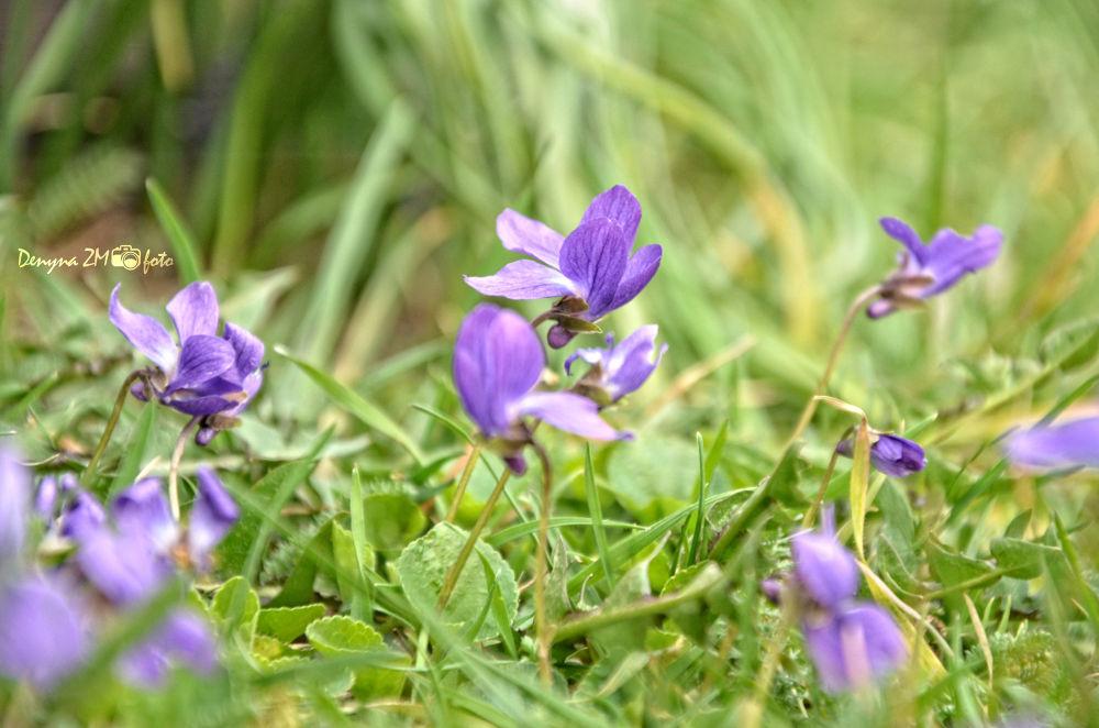 Violet by Denyna ZM