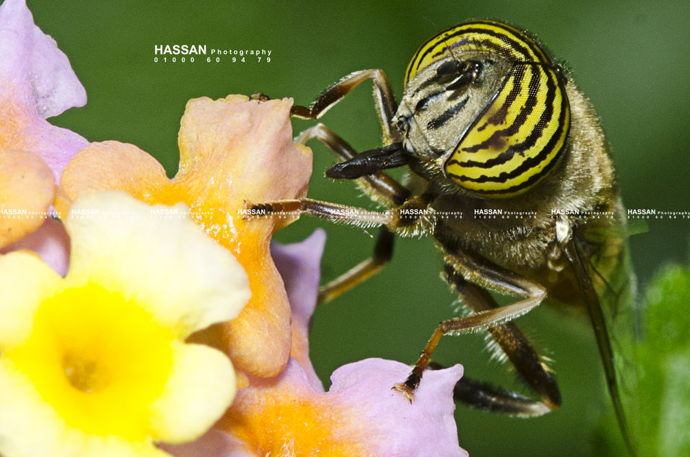 Bee 2 by Hassan Elbarbary