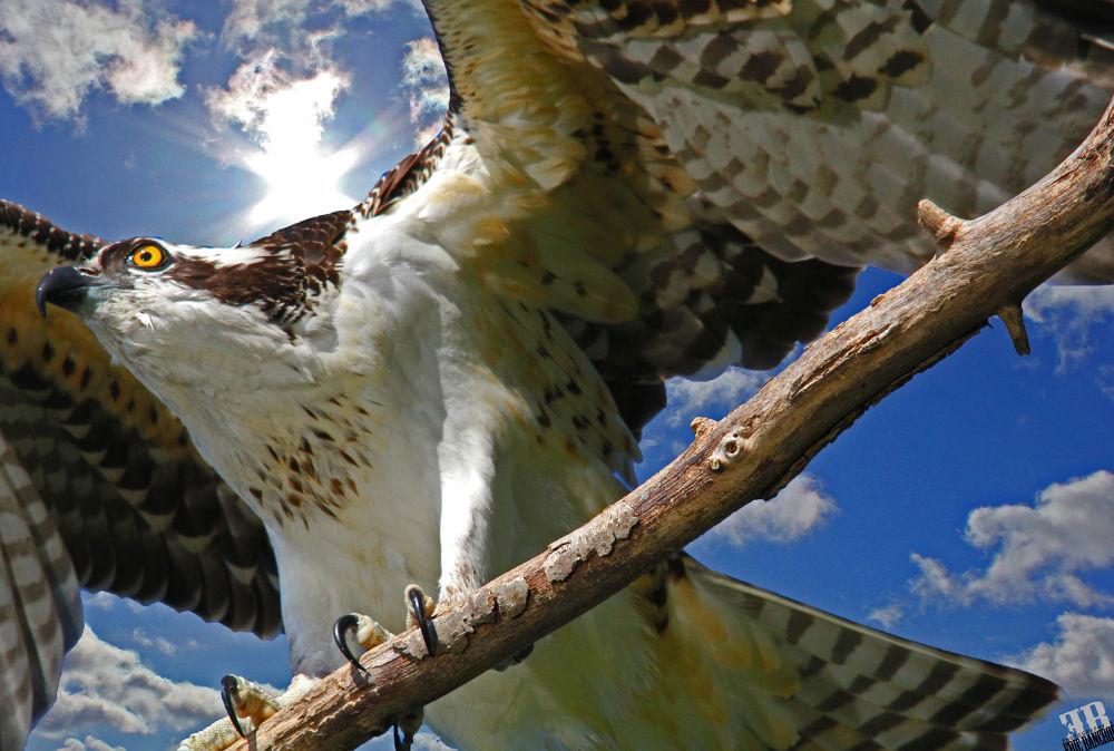Take flight by Eric Bancroft