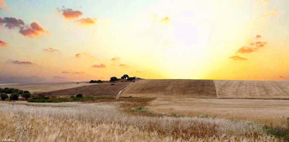 Land of gold. by Samir Sami