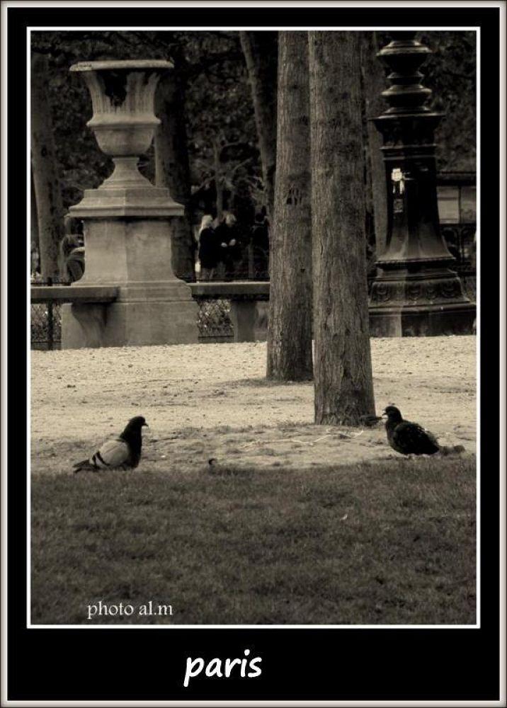 Paris by annlaure