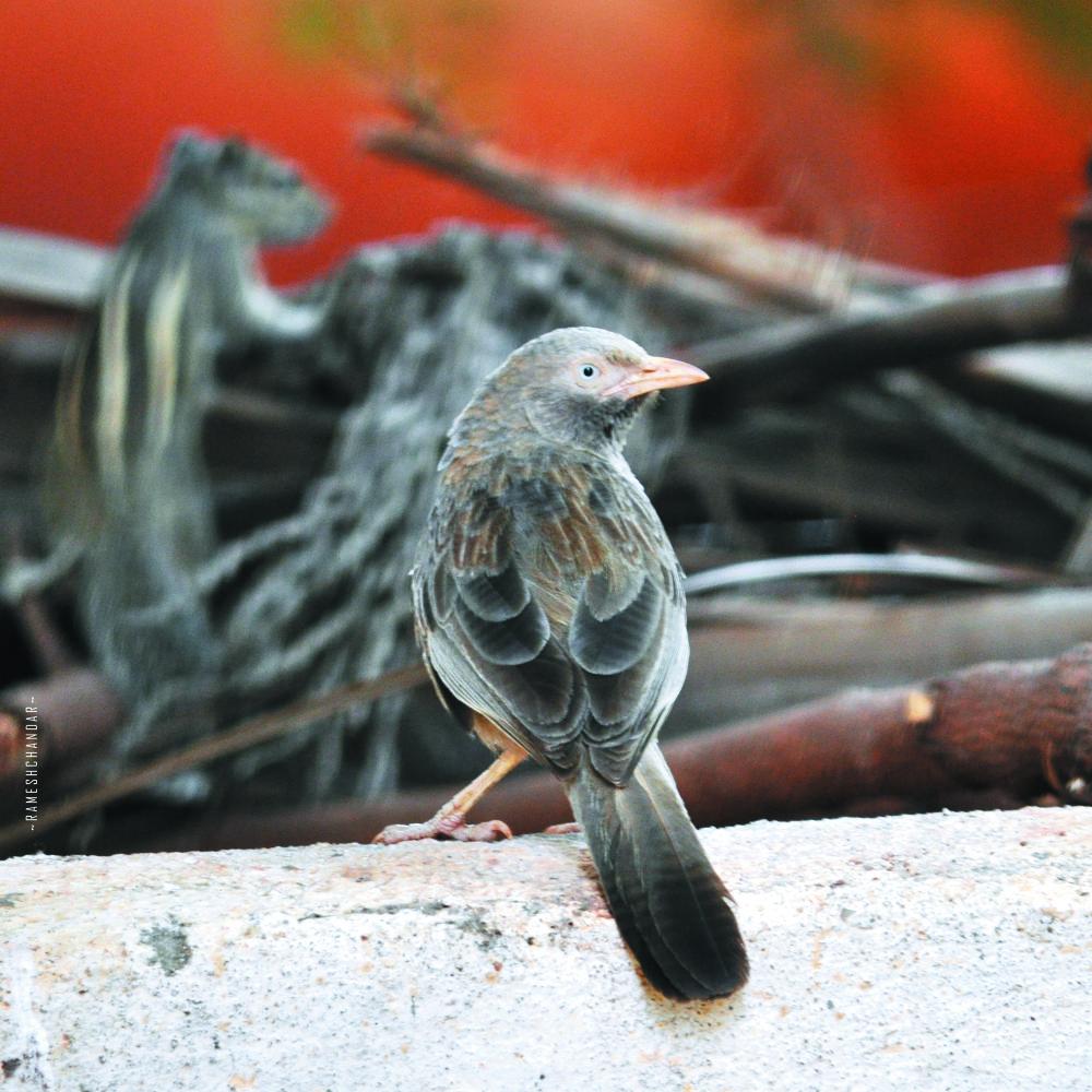 bird_on_the_wall by rameshchandarr