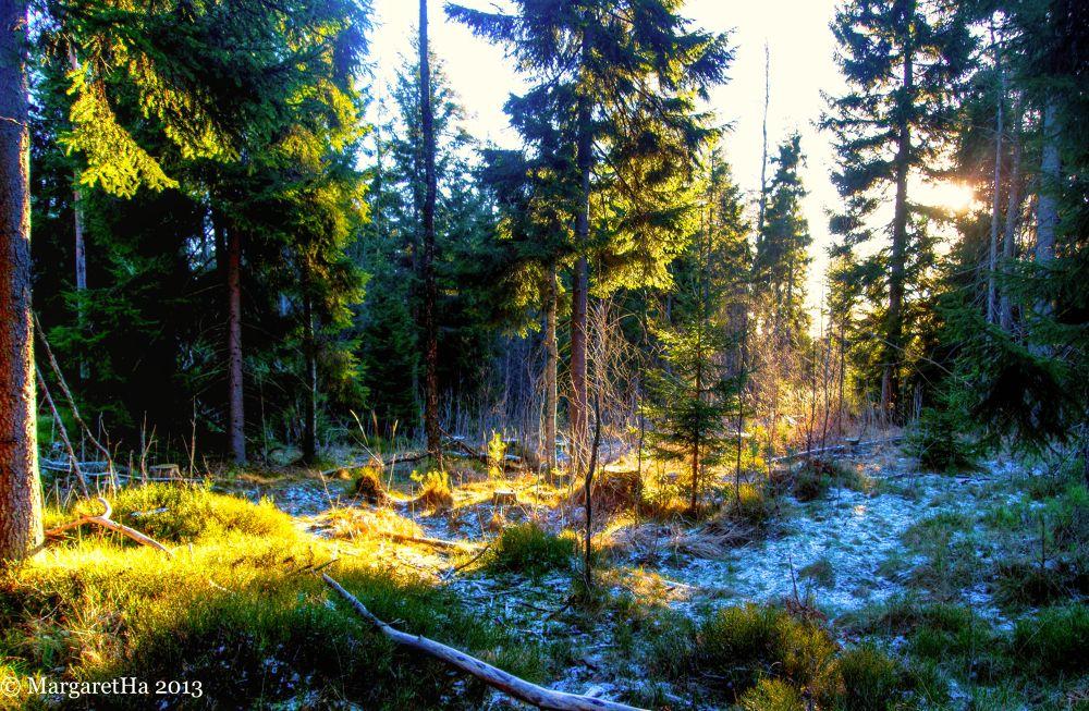 Frosty by Margaret Brynildsen Hagevik