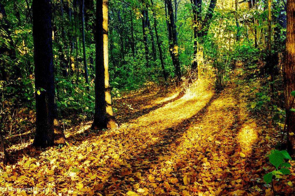 Autumn III by Margaret Brynildsen Hagevik