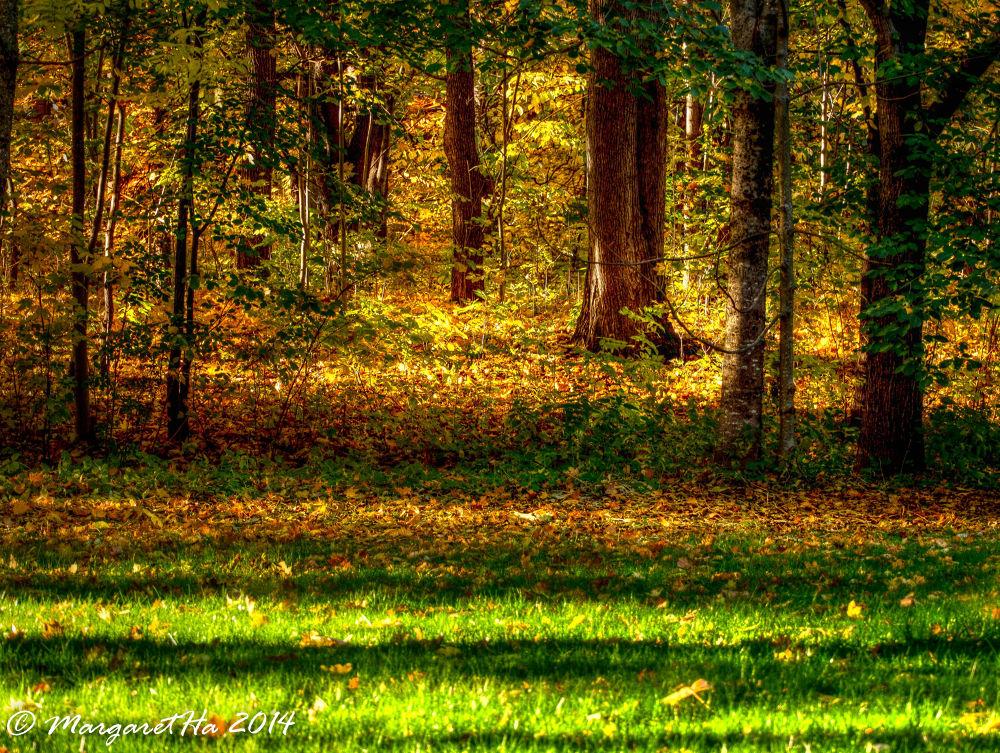Shadows in the wood by Margaret Brynildsen Hagevik