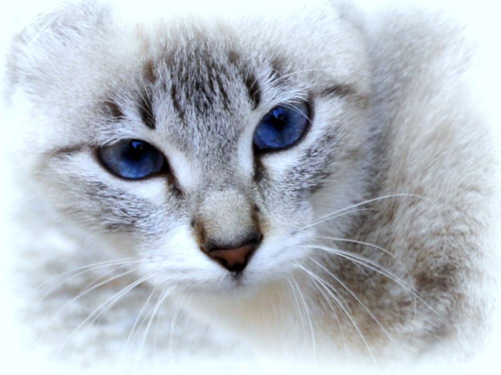 _DSC0129 azules by angelgarcia
