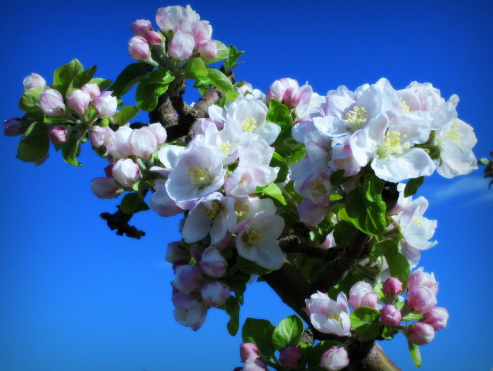 IMG_0030-001  primavera by angelgarcia