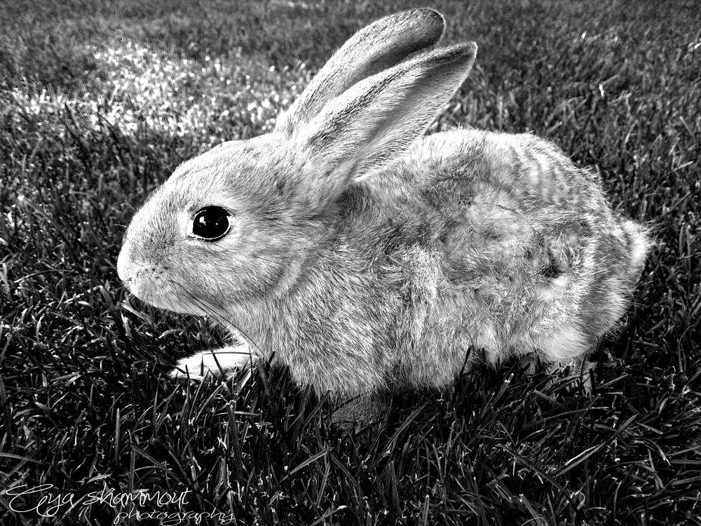 naughty rabbit by Aya