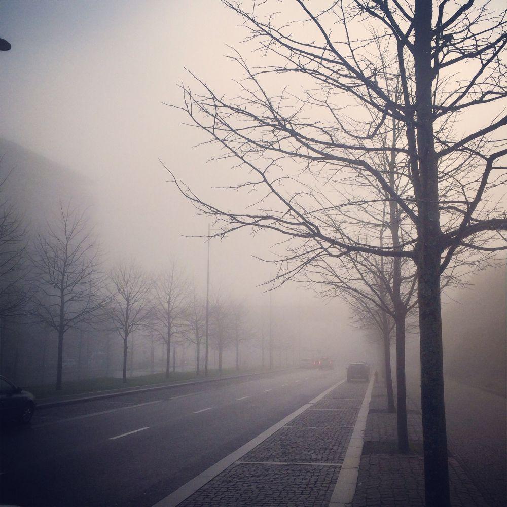 Morning fog... by Emanuel Pinto