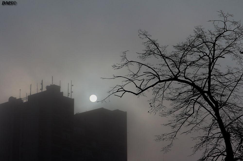 Fog by Dragoljub