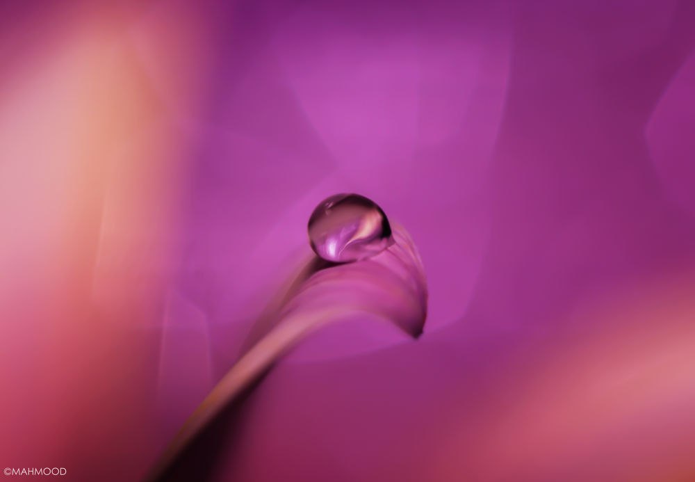 Pink ^^ by Mahmoodalsawaf