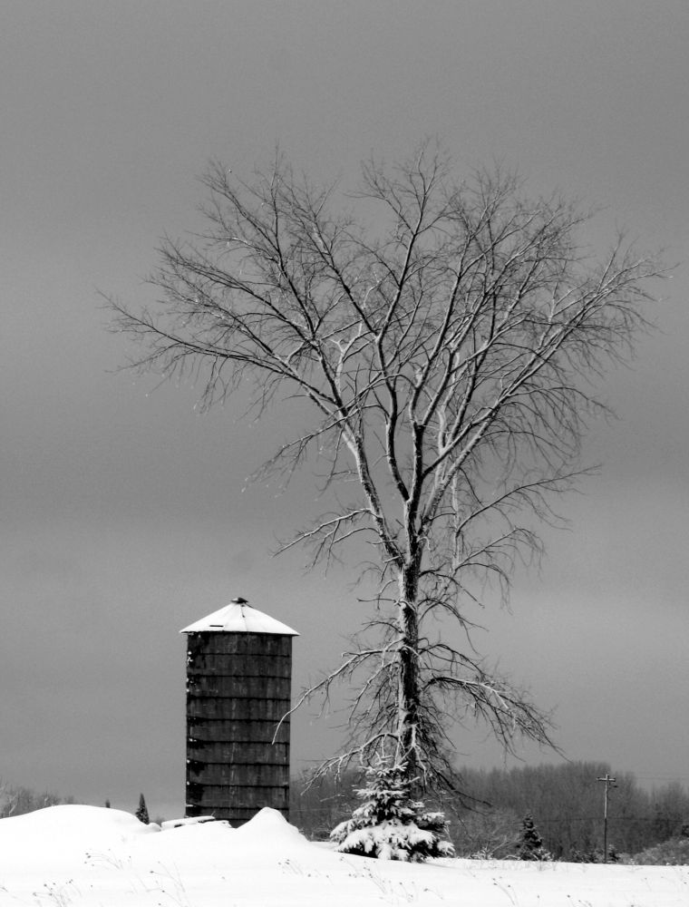 The Silo and the Tree by Joe LaFata  Photography  Great north Photos