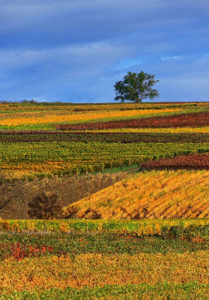 Vineyard by Jan Neumann