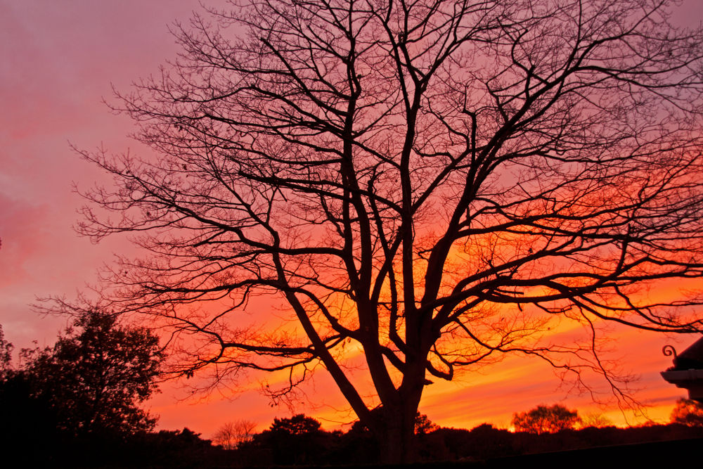 Tree on fire by simon