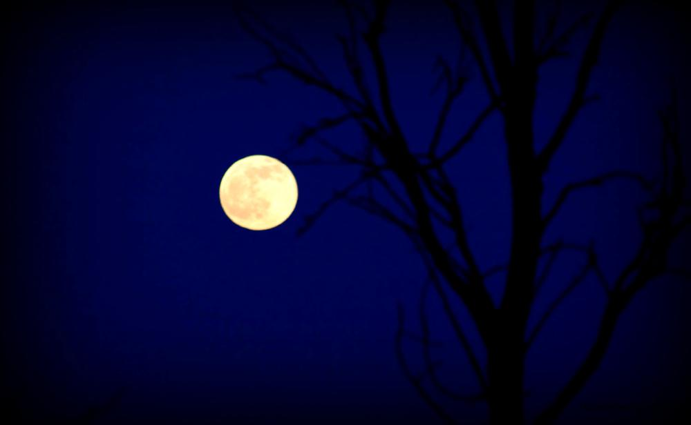 Full moon by Suz-Anne Dlne