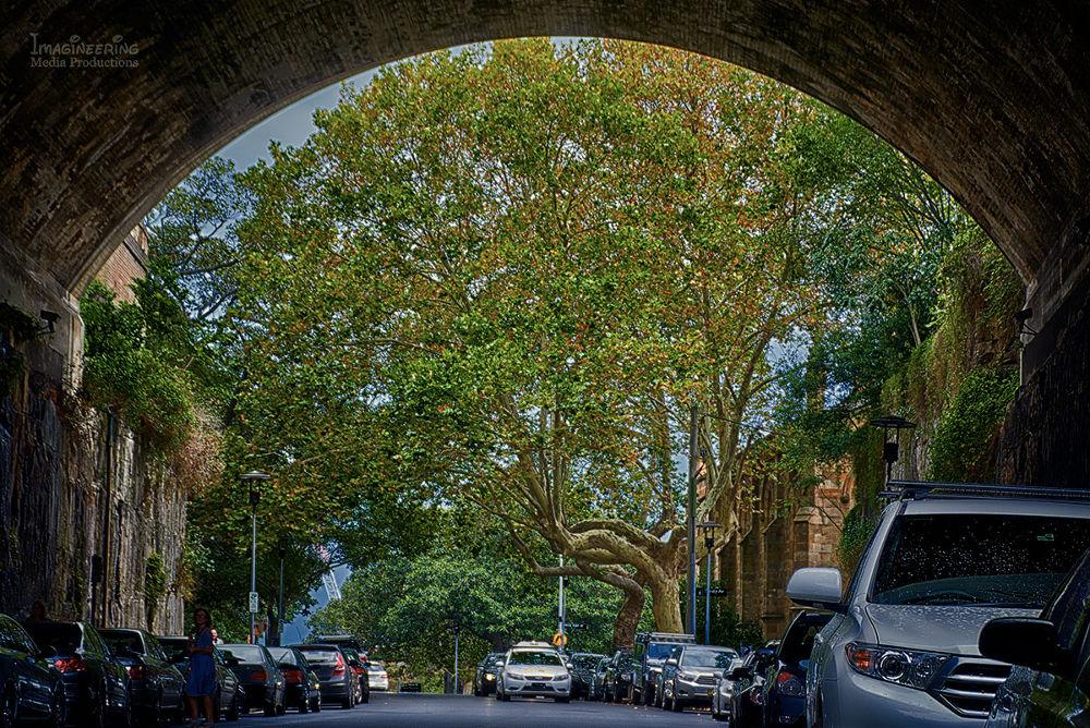 Argyle_Cut by Jim Merchant