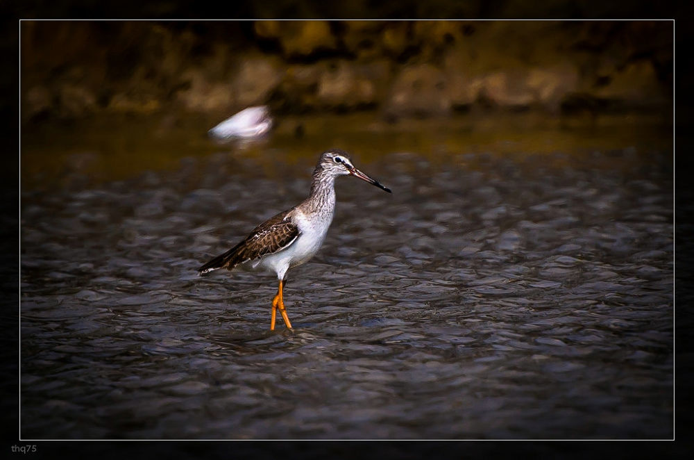 Looking for fish by QuanTran