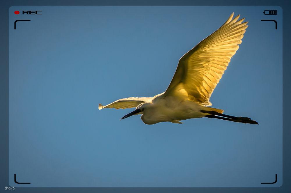 in flight-2 by QuanTran
