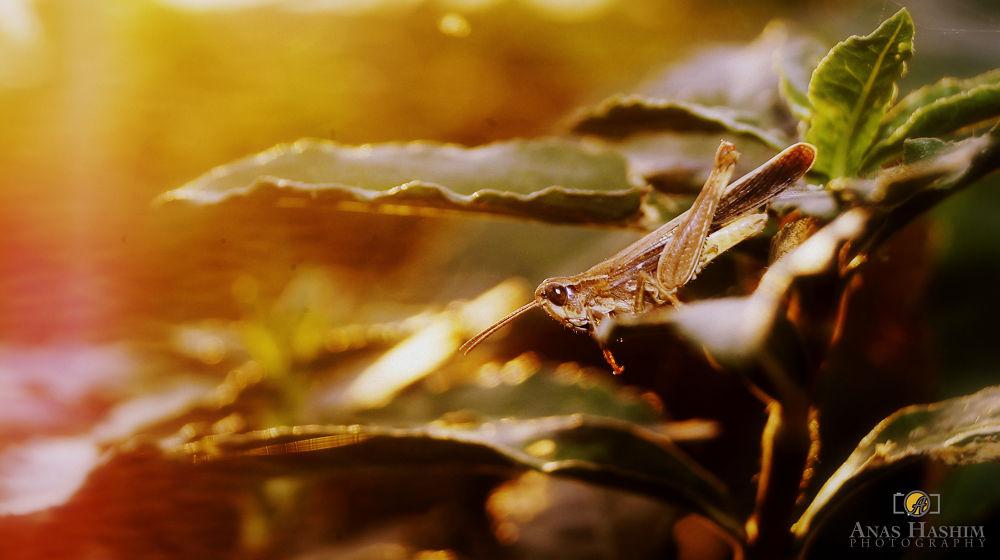 Caterpillar by Anas Hashim