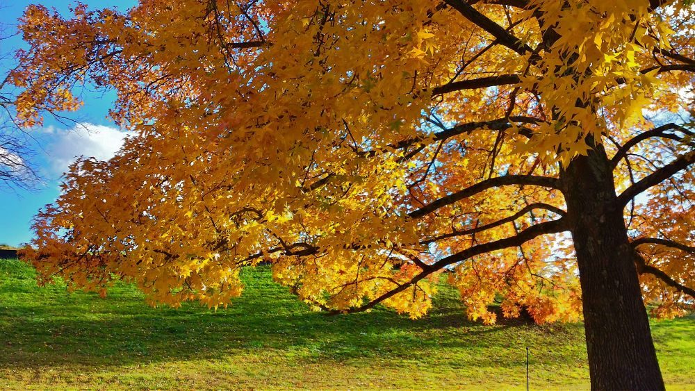Last Fall :) by Joshua Murdock -     Murdock Photography