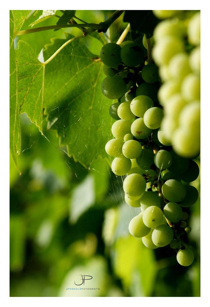 grapes by Jürgen Ponhold
