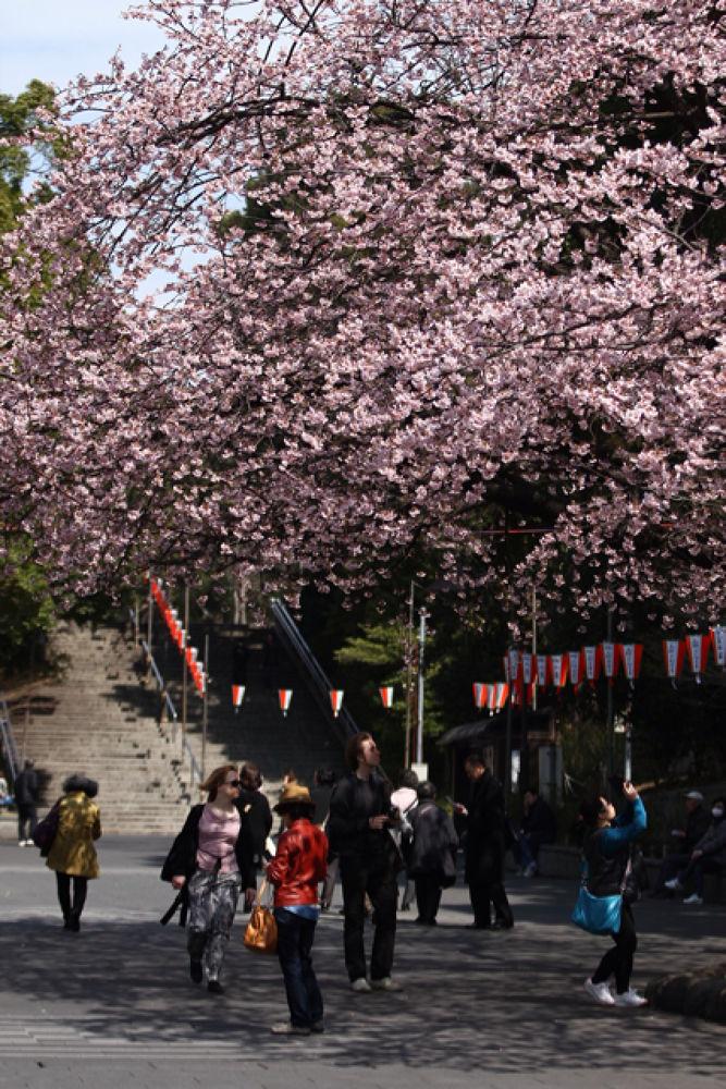 under sakura by Jp Punzalan