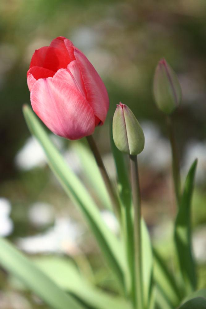 spring III by Jp Punzalan