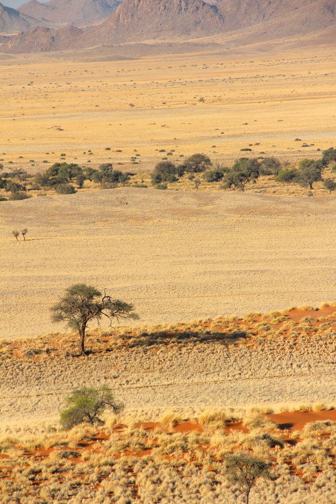 Desert Landscape by Chene Emmerick