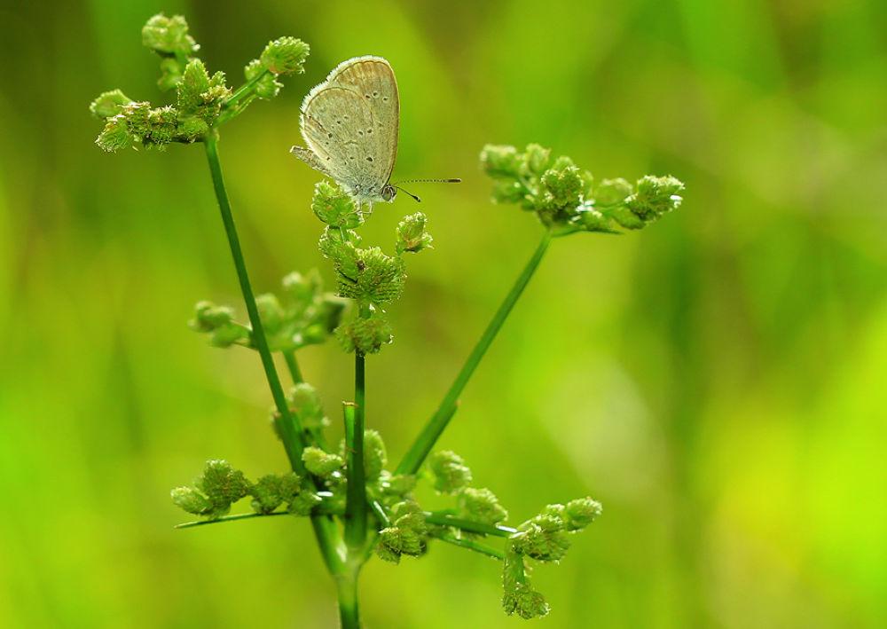 """Butterfly""2 by Sirajuddin Halim"