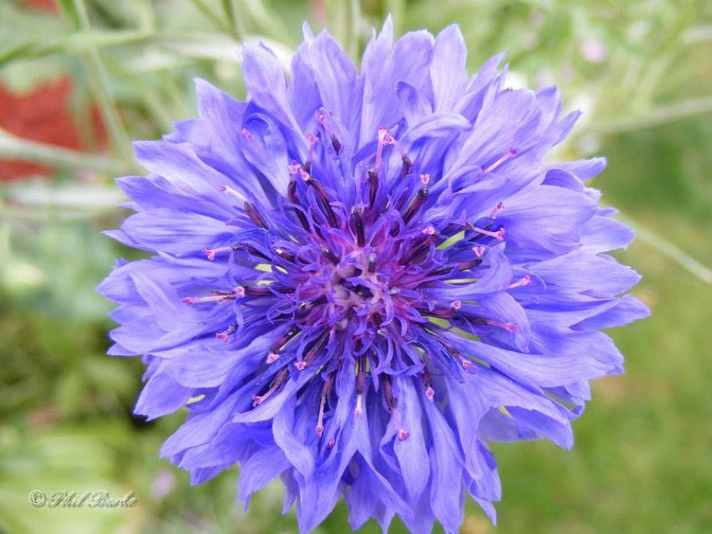 Flowers 4 by Phil Burke