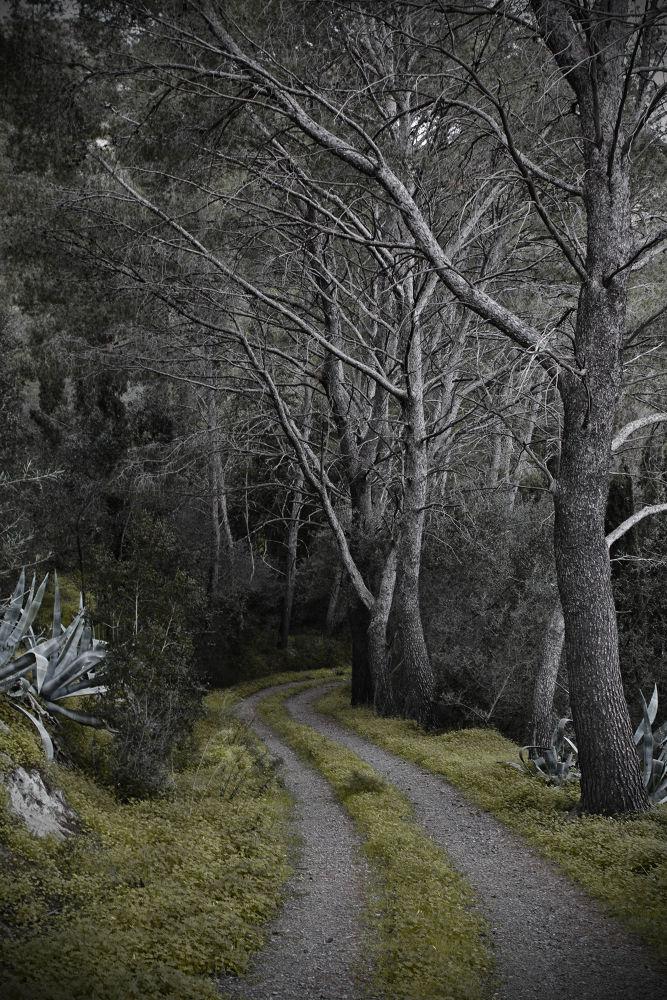 The Path by gabriele copez