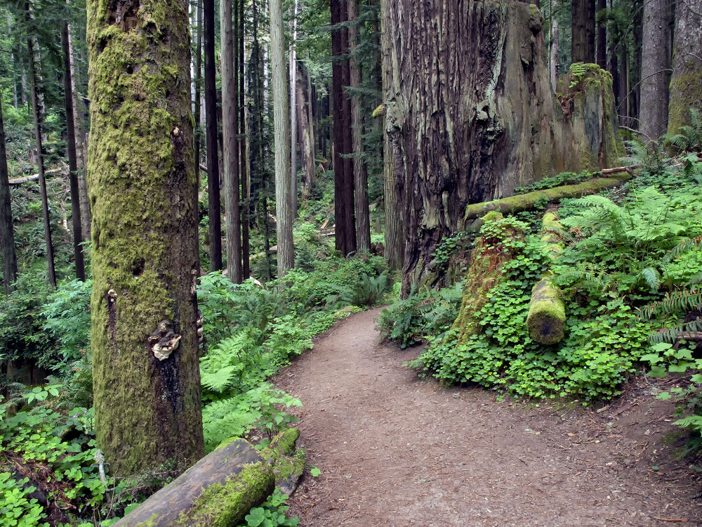 Pathway through the forest by Joe Saladino