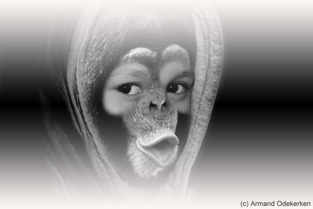 Neil the chimp by Armand Odekerken
