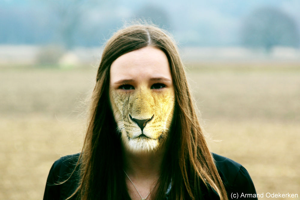 Demi the lioness by Armand Odekerken