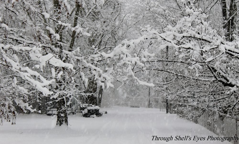 Winter 2014 by Through Shell's Eyes Photography