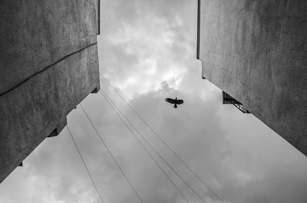 strange  by Akshay Shinde