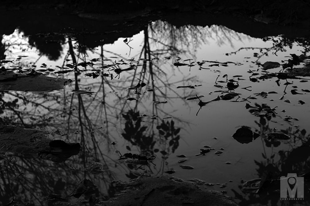 17 Iran - Golestan - Shstkla - trees reflected in the water hole by Mohammad Lashkarboloki