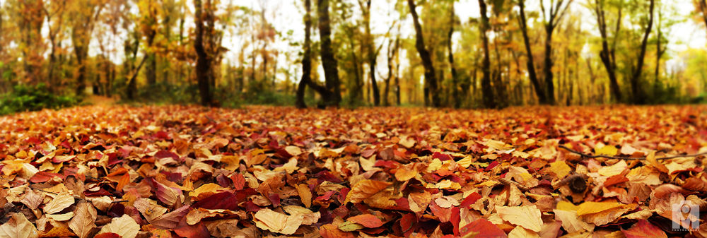 23 Iran - Golestan - Qvrvq forest - autumn leaves by Mohammad Lashkarboloki