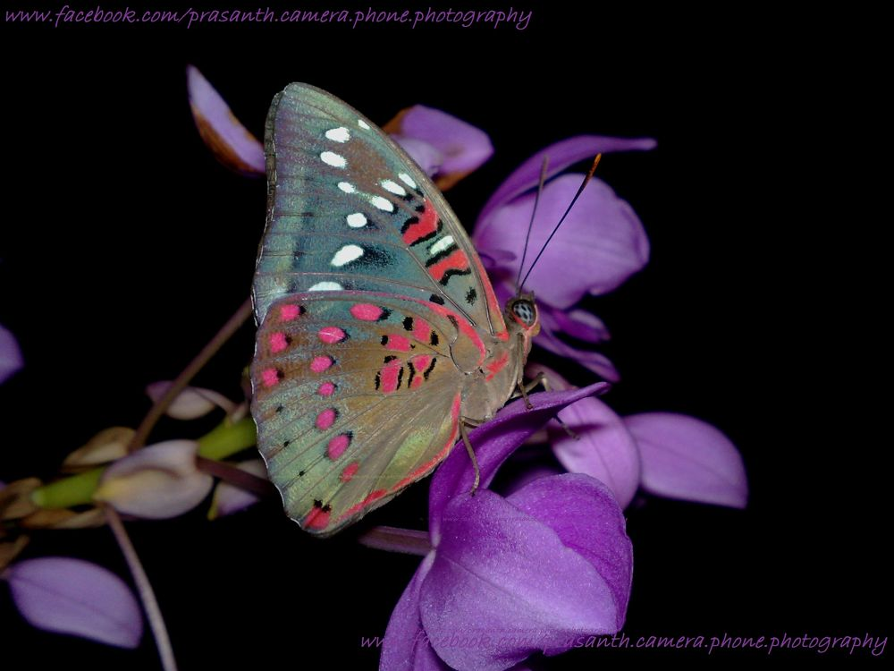 butterfly @ Night by Prasanth's camera phone photography