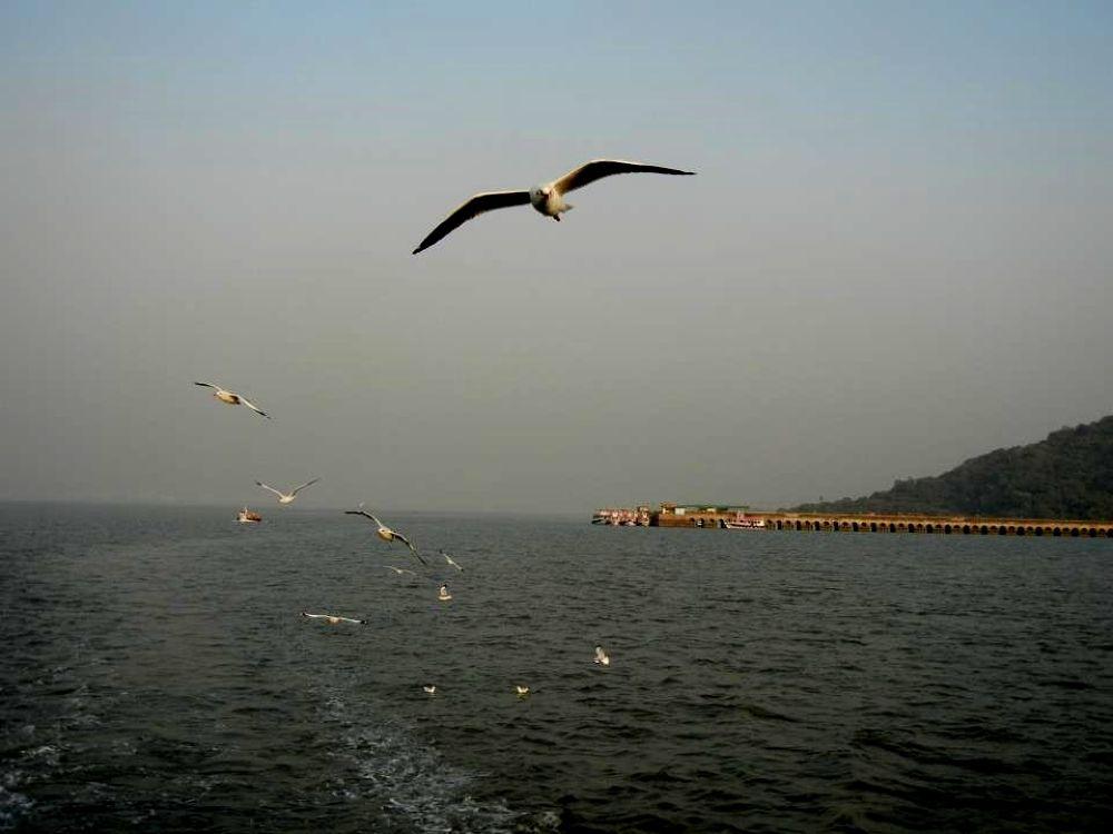 flying free by Shuvarthy Chowdhury