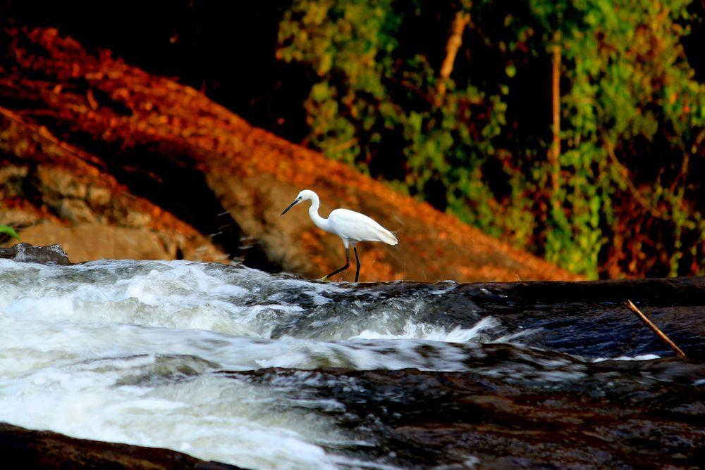 IMG_2488 by Shuvarthy Chowdhury