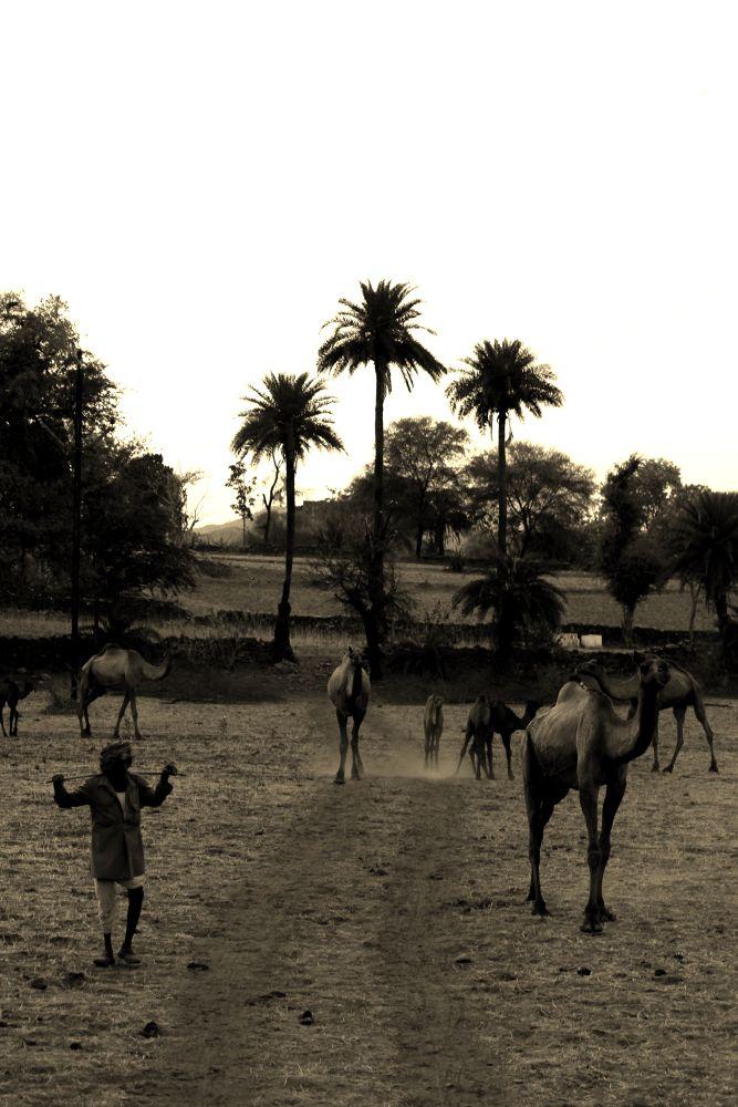 IMG_7614 by Shuvarthy Chowdhury