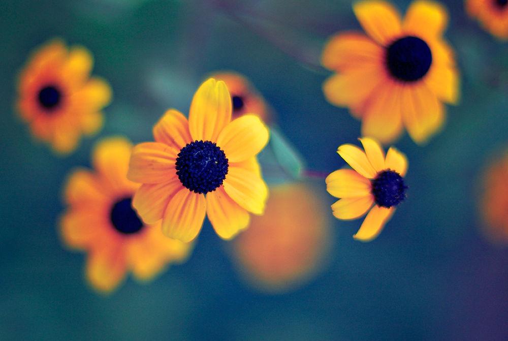 Bokeh Flowers by dfocused