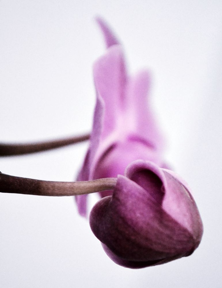 flower by Elisabetta Tozzi