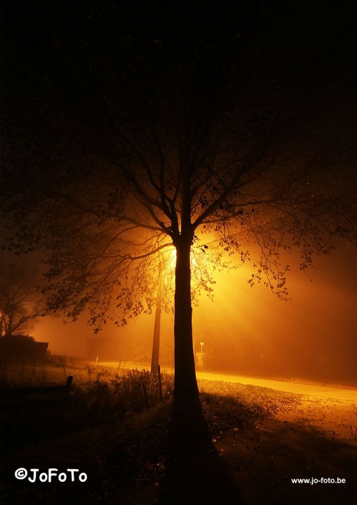 The fog, the tree and the streetlight by jo_stoop