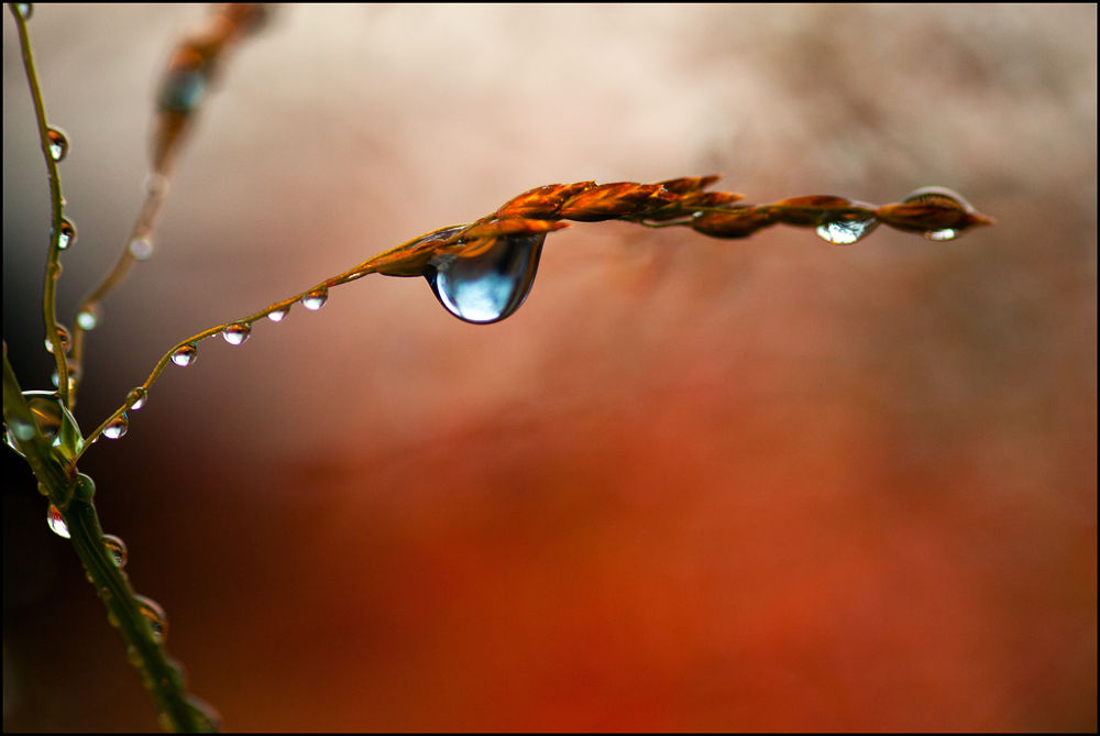 A drop of life.... by Sif Brustad