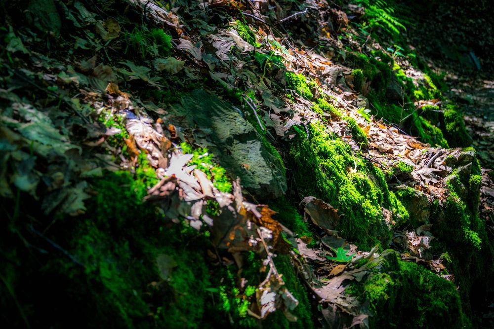 Leaves by Andrea Antonacci